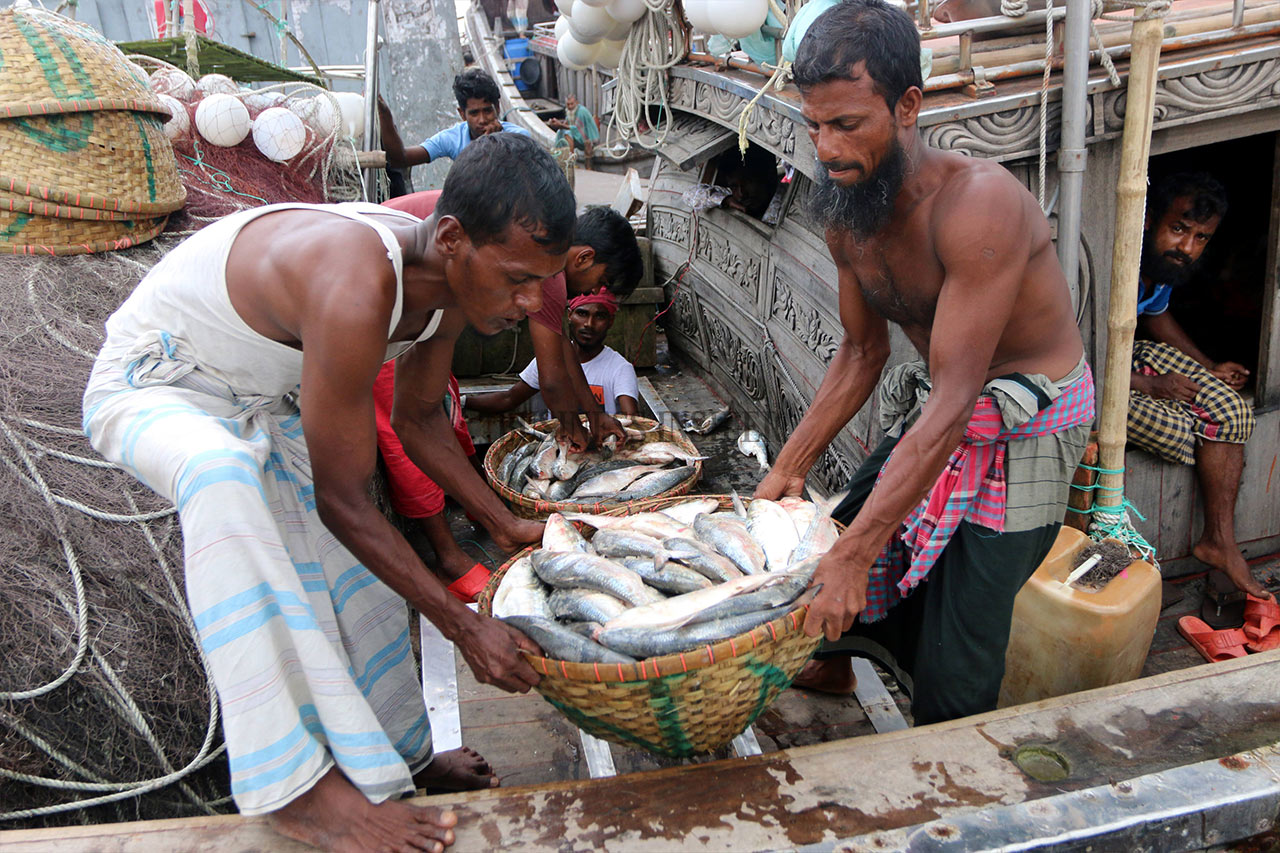 Workers are busy unloading fish from fish trawlers