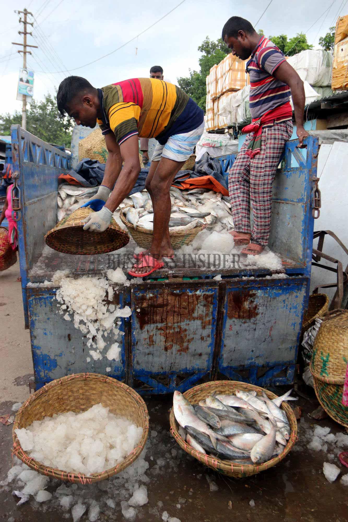 A man throws crushed ice in a basket while unloading fishes from a pickup van