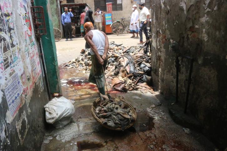 All animal waste cleaned, says Mayor Atiqul