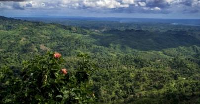 Govt contemplates digital survey of forests