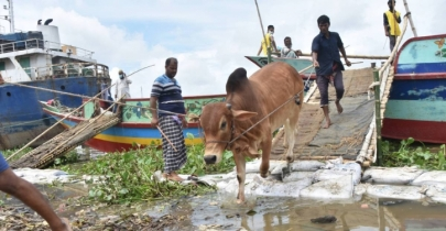 Cattle shipment scanty as traders watch prices