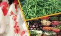 Prices of essentials rise in city kitchen markets