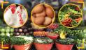 Kitchen market: Prices of chicken, eggs, vegetables shoot up