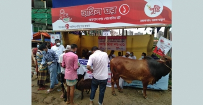 Traders see a flat cattle market in city