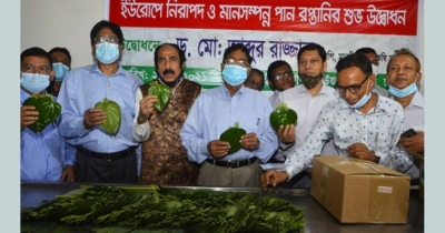 Betel leaves export to Europe resumes as ban ends after 7 years