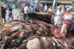 Rawhide prices low, tanners blamed