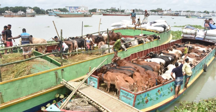 Trawlers carrying cattle see lukewarm response from traders