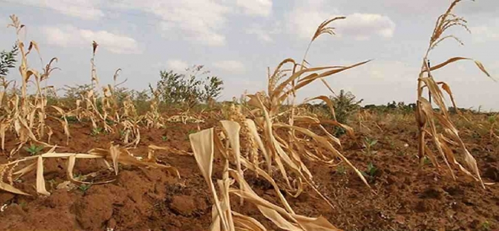 NAP needs to focus climate adaptation priorities, say experts
