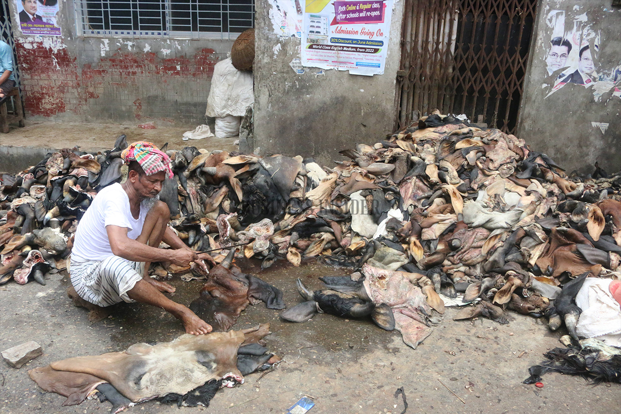 A worker removing horns and ears of from rawhide came from sacrificial animals
