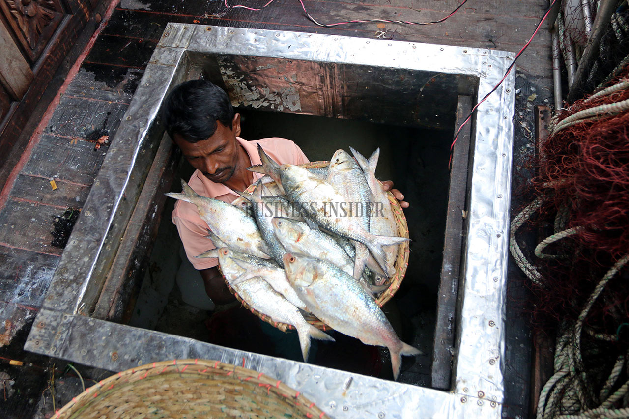 A fisherman unloads his Hilsa catch from a trawler storage
