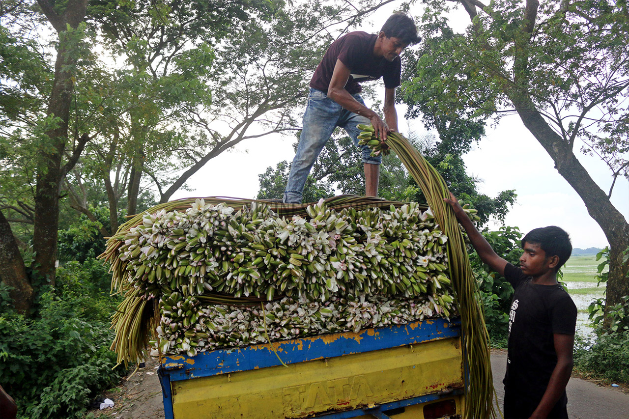 A person loads waterlilies onto a truck